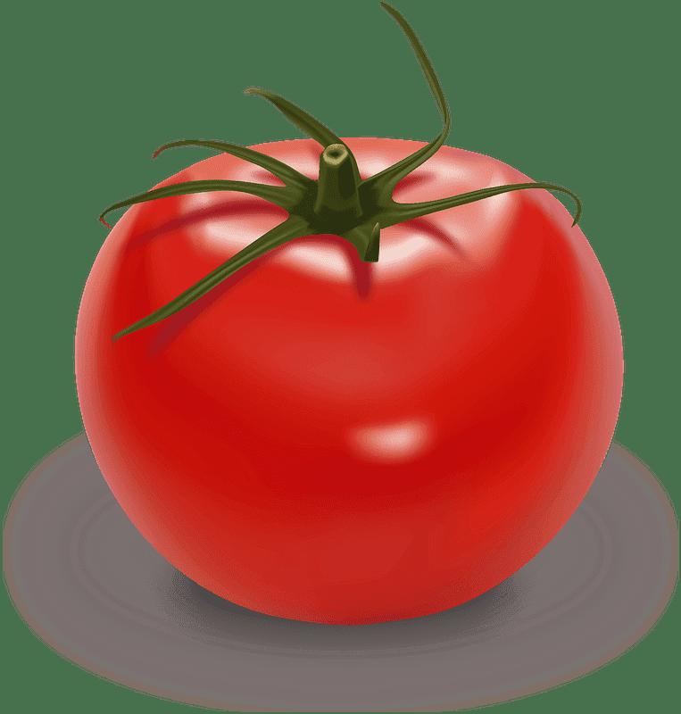 Tomato clipart transparent 7