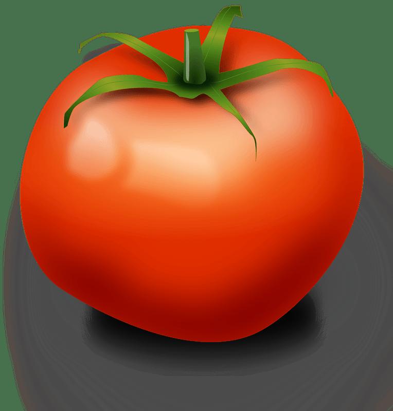 Tomato clipart transparent