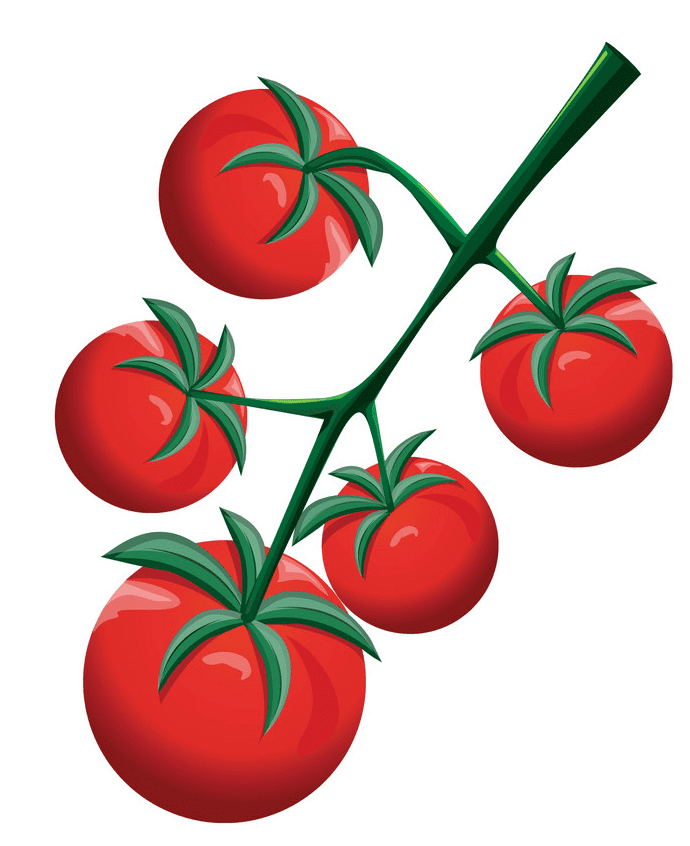 Tomatoes clipart picture