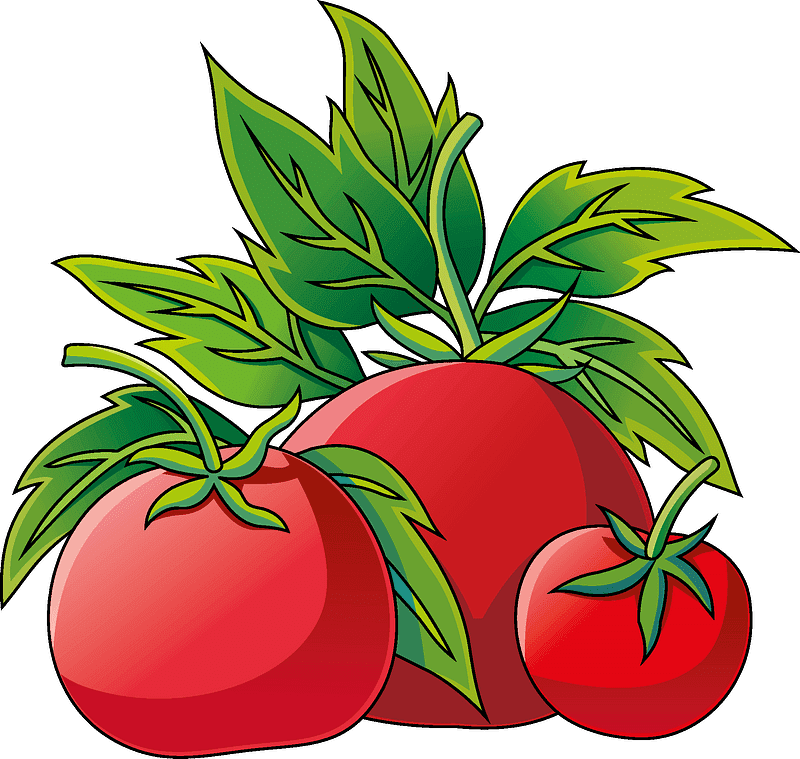 Tomatoes clipart transparent picture