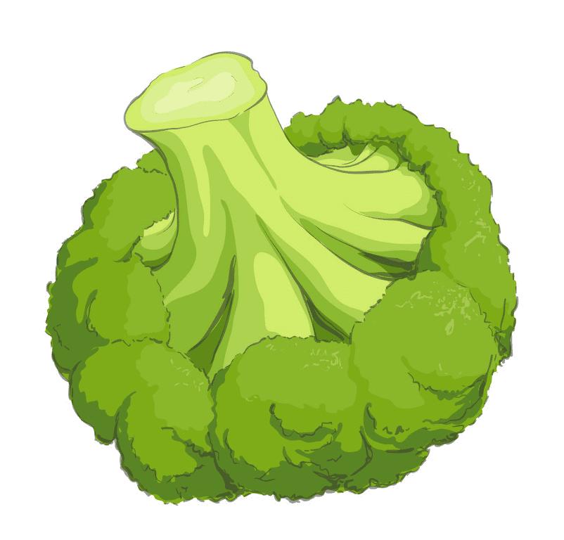 Broccoli clipart download