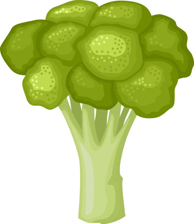 Broccoli clipart free picture