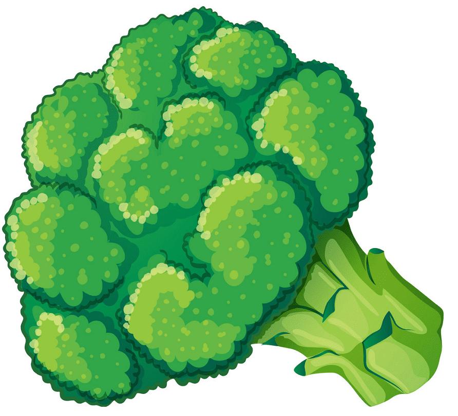 Broccoli clipart free