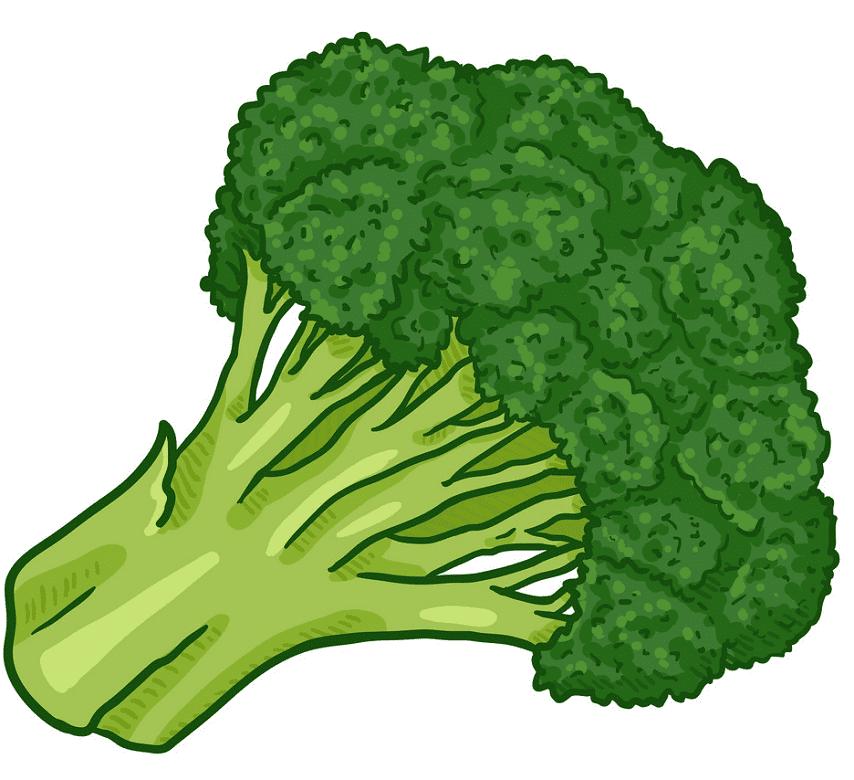 Broccoli clipart image