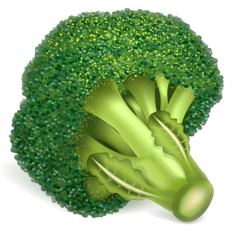 Broccoli clipart images