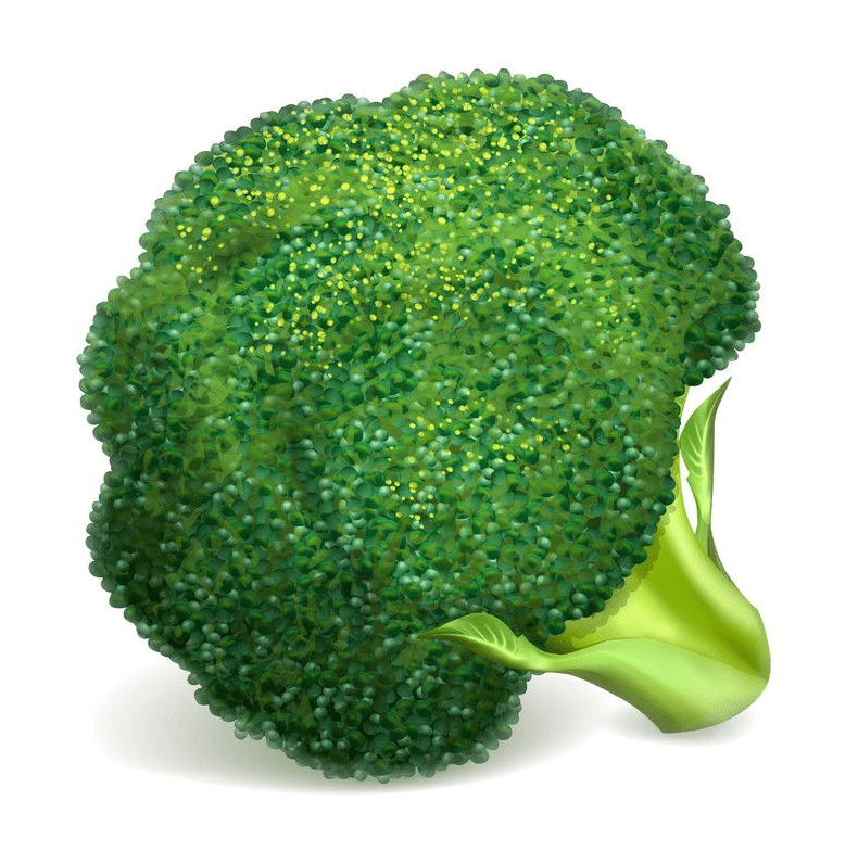Broccoli clipart png download