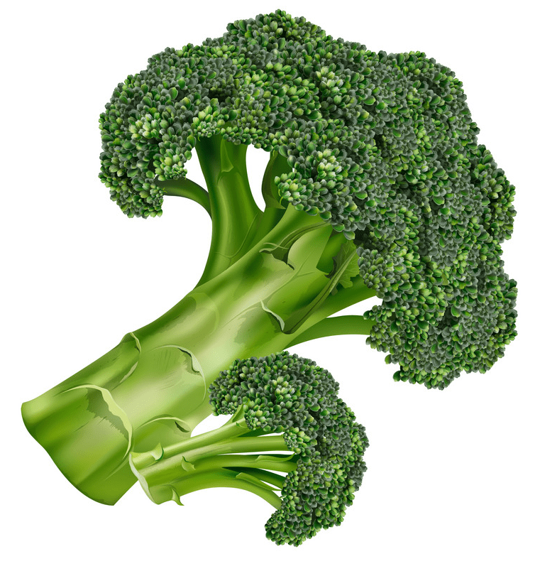 Broccoli clipart png free