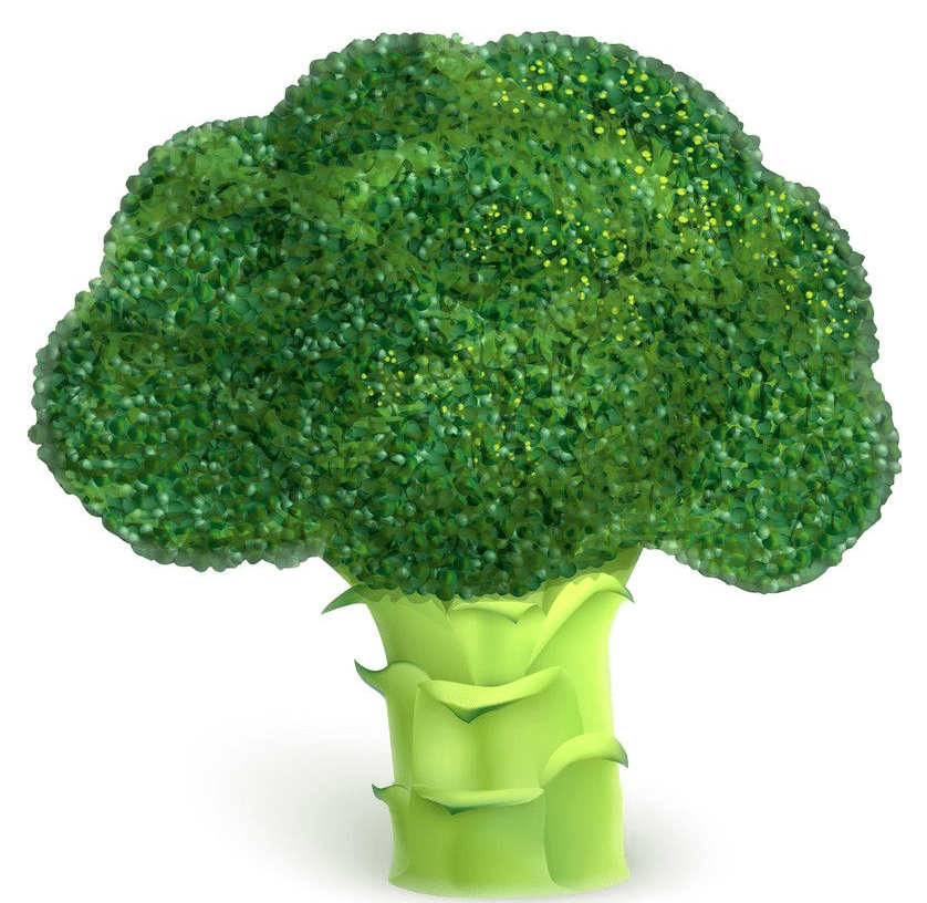Broccoli clipart png image