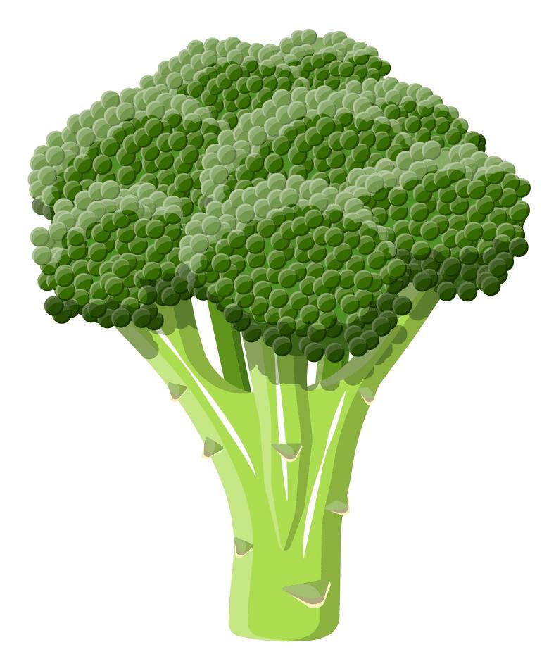 Broccoli clipart png