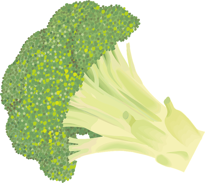 Broccoli clipart transparent for free