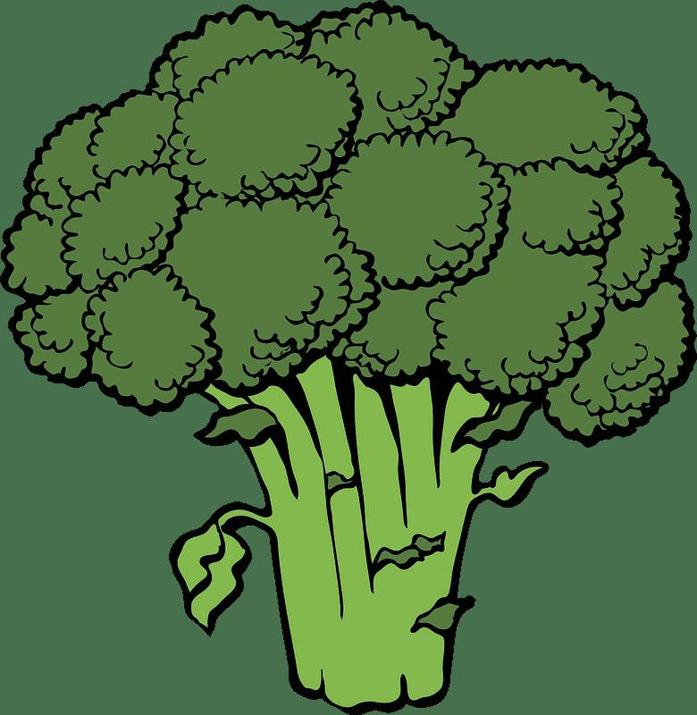Broccoli clipart transparent images