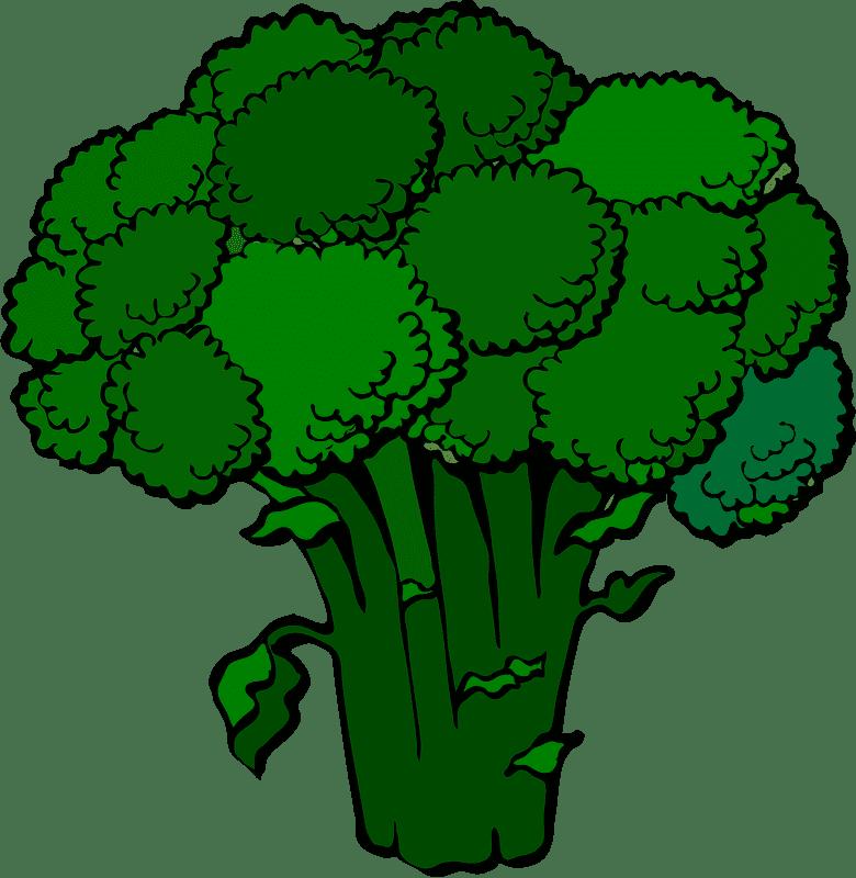 Broccoli clipart transparent picture