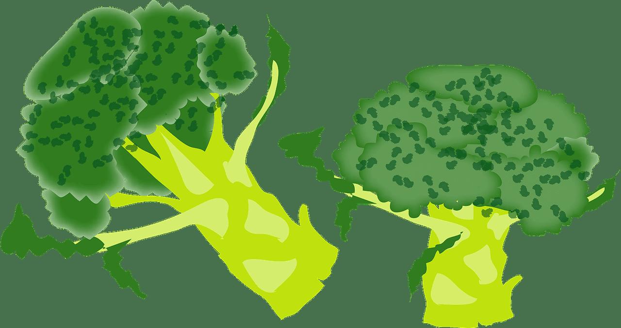 Broccoli clipart transparent png