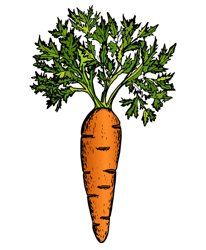 Carrot clipart free 2