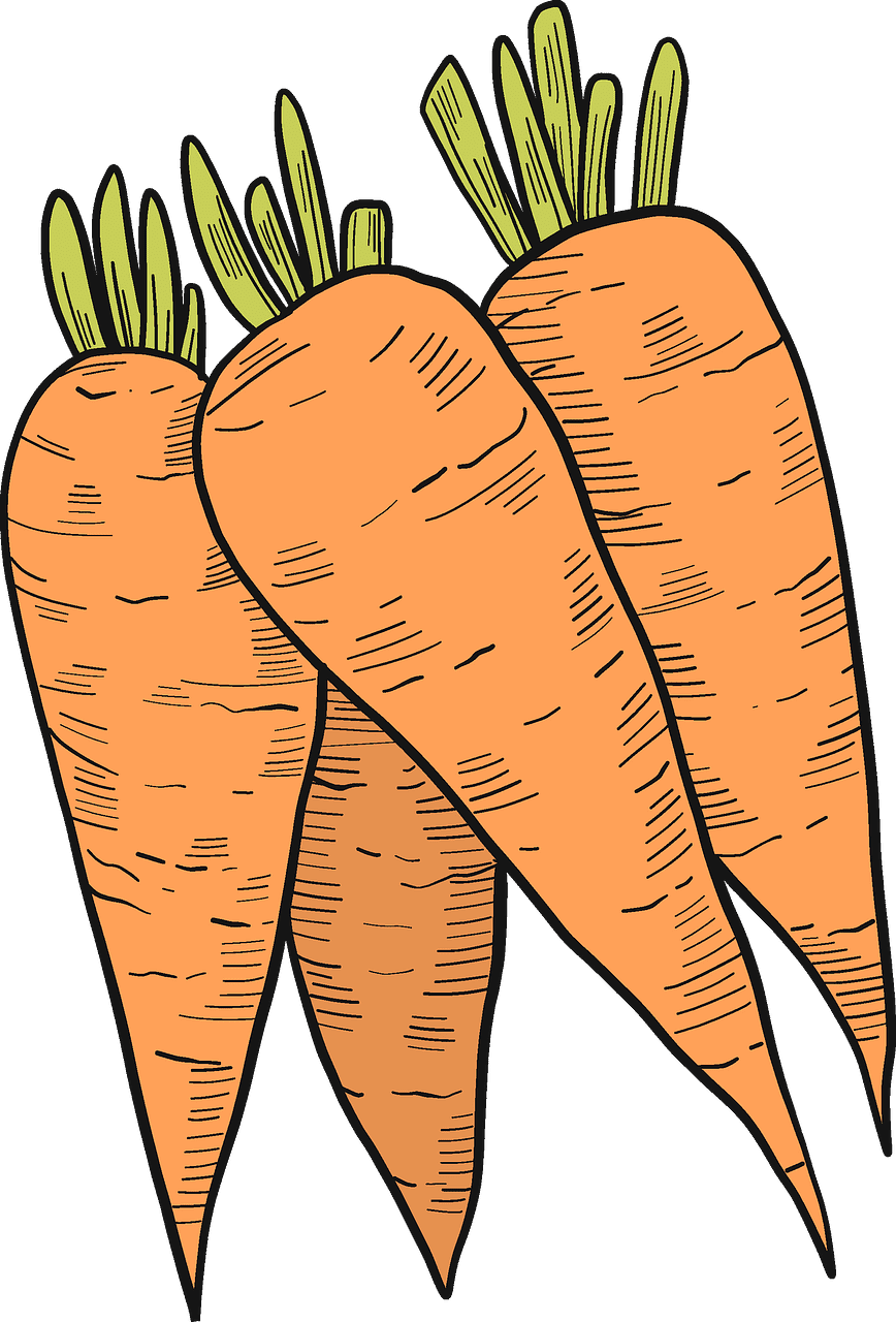 Carrots clipart transparent for free