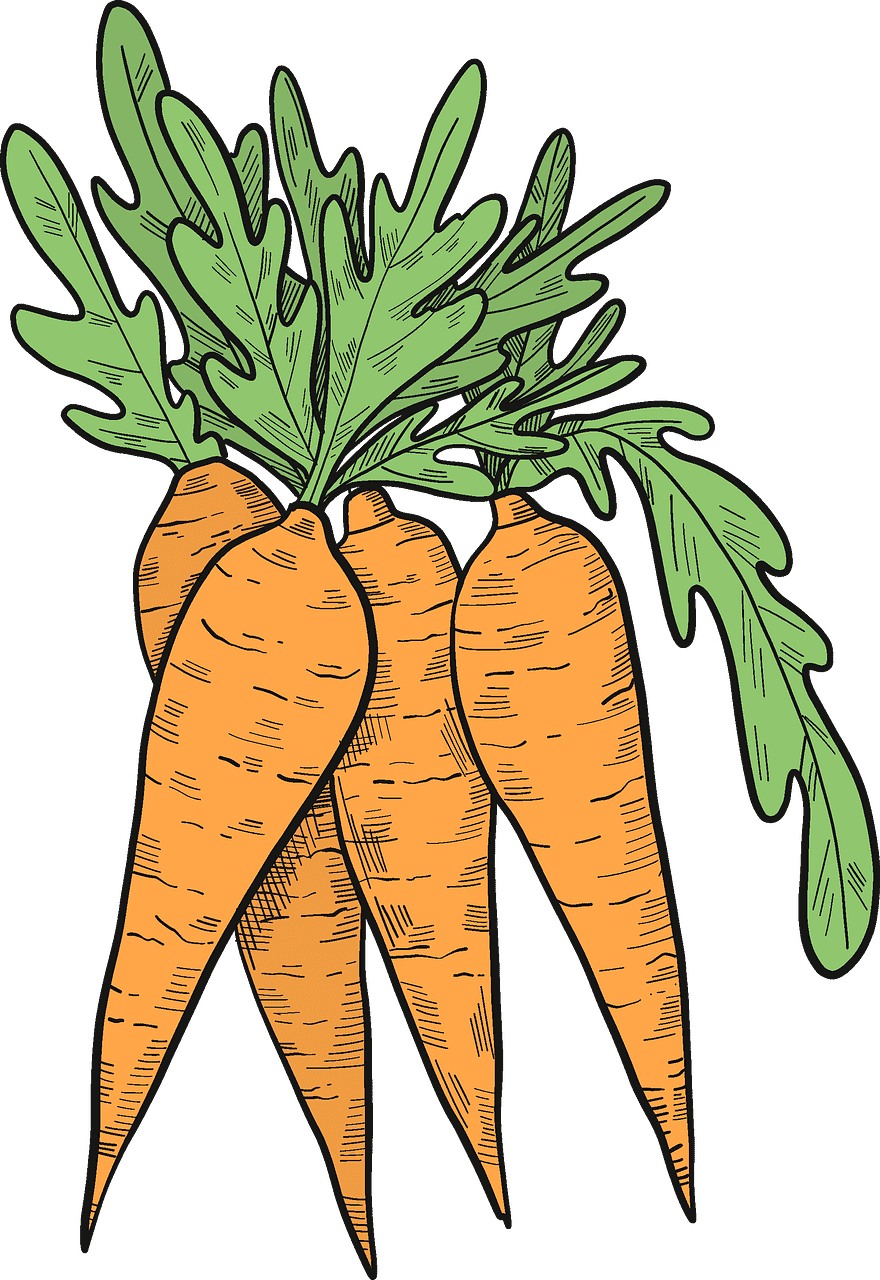 Carrots clipart transparent free