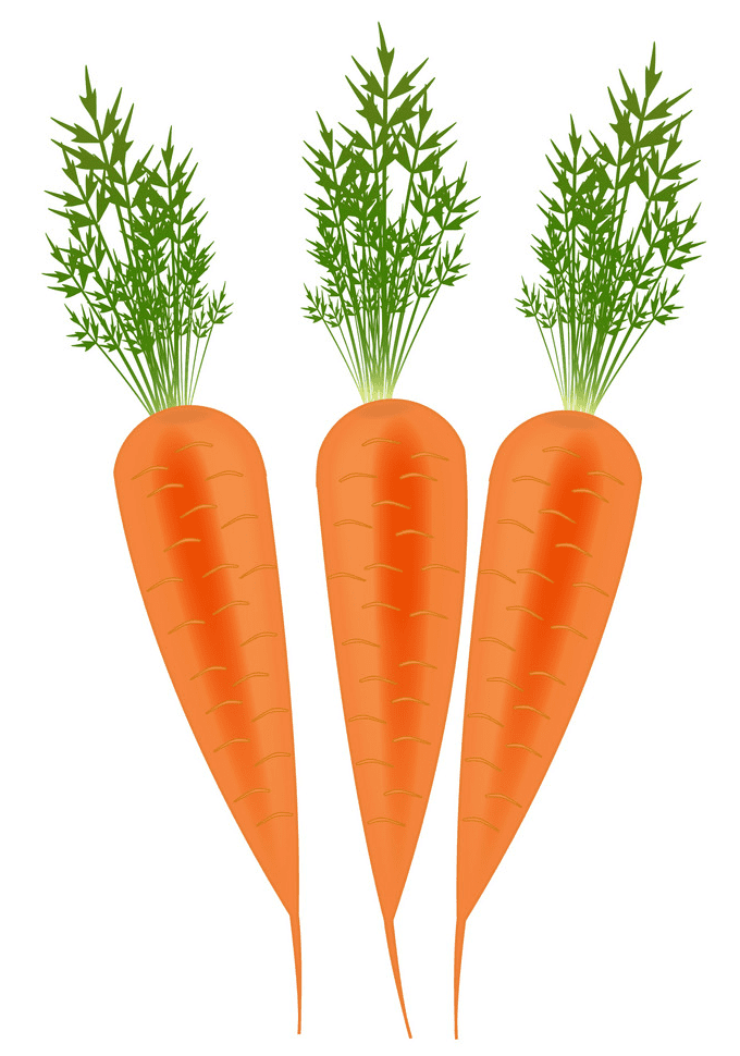 Three Carrots clipart