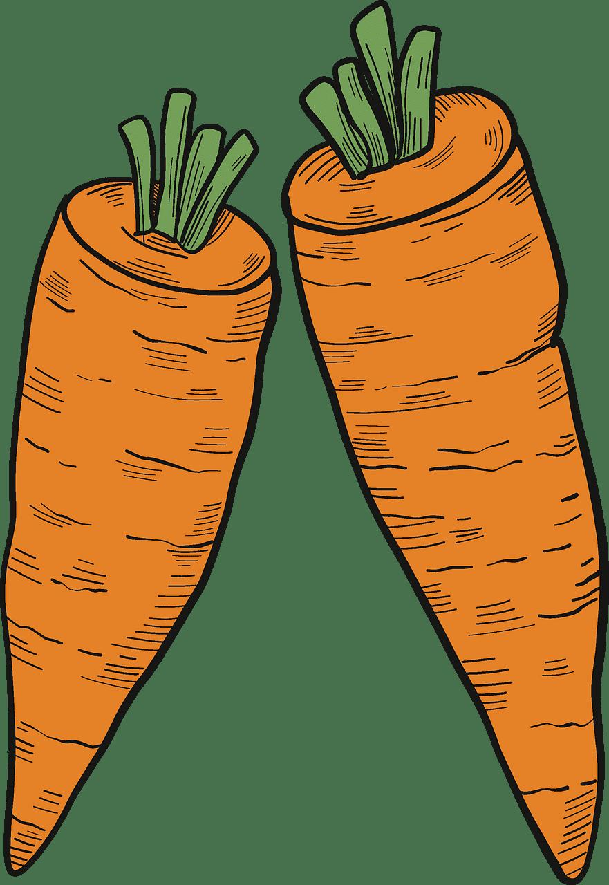 Two Carrots clipart transparent
